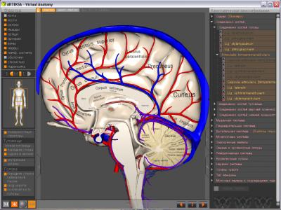 Скриншот программы Виртуальная Анатомия 4.0
